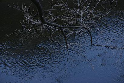 枯れ木1.jpg