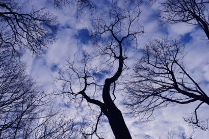 裸樹1.jpg